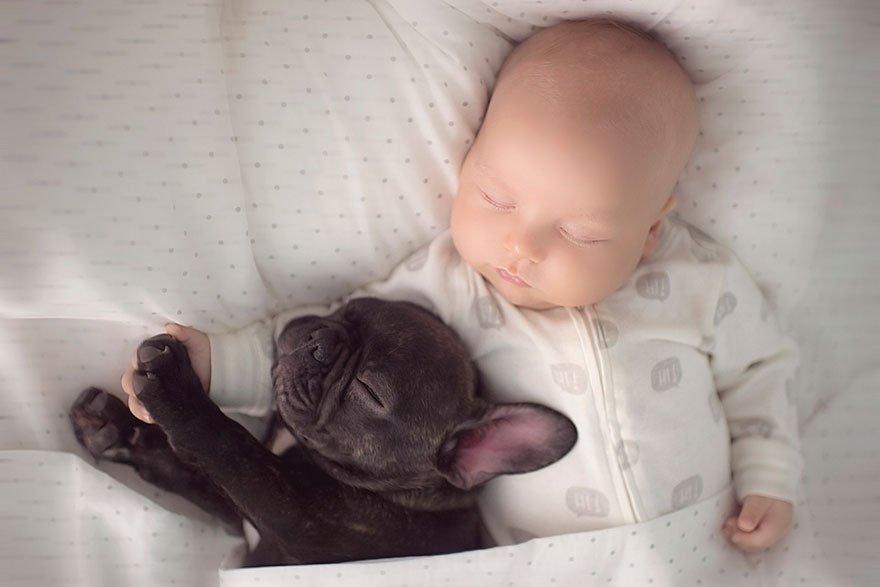 amizade-bebe-bulldog-02