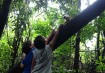 O macaco-de-cheiro não tem medo de quem tem banana