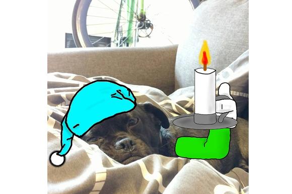 cachorro-ok-05