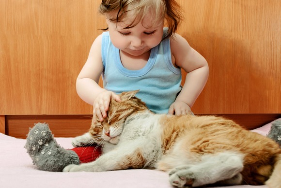 tiny-boy-playing-with-ginger-cat-house-picture-id511502257