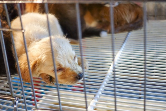 young-dog-in-a-cage-at-markets-picture-id602321658