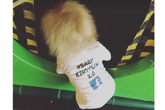 (Foto: reprodução do Facebook / Baby Einstein 2.0)