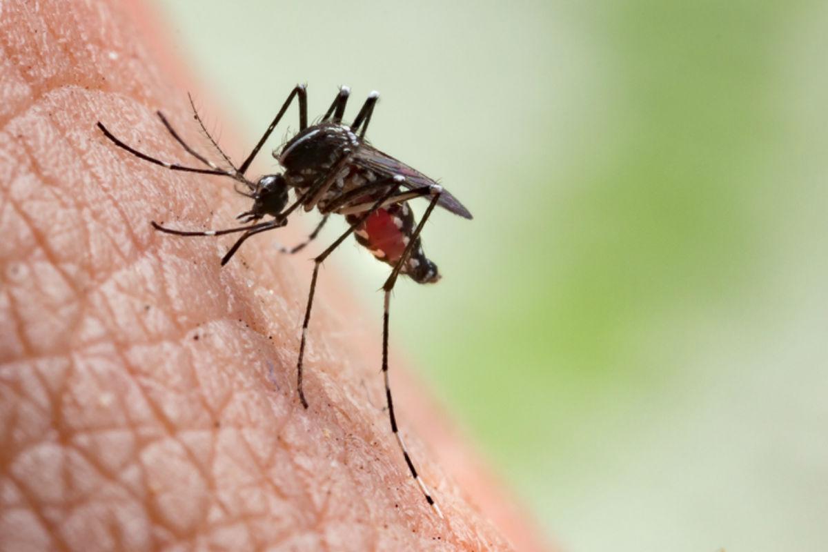 mosquito-transmissor-da-malaria-picando-pele-humana