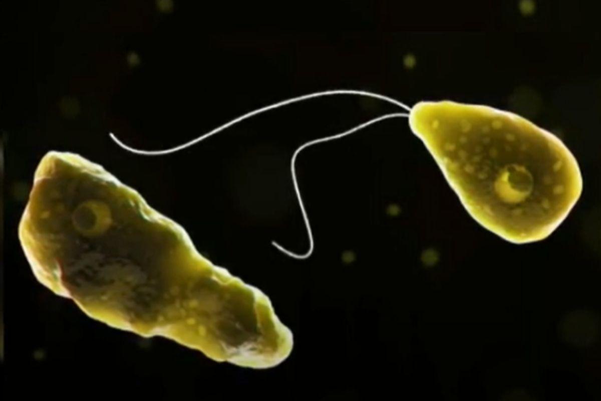 Ela causa uma infecção chamada meningoencefalite amebiana primária
