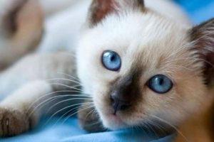 Conheça as vantagens de optar por ter um felino em casa