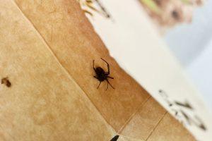 Mãe encontra aranha na fralda do bebê e faz alerta para os pais tomarem cuidado