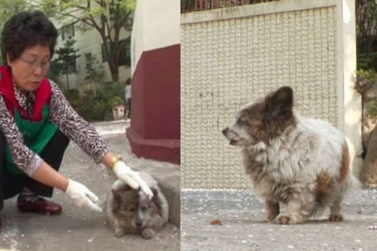 A cadela recebia cuidados dos moradores do local