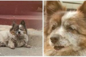 A cachorra espera há 10 anos pela família