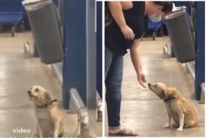 O cachorro simpático acena para as pessoas no mercado