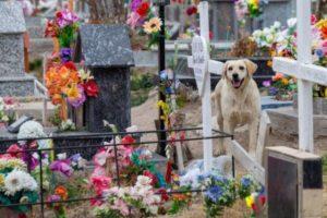 Cão acompanha túmulo de dono falecido por três anos no cemitério