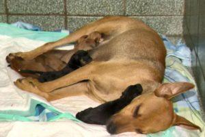 Cadela grávida espera em frente a uma clínica veterinária para ser atendida