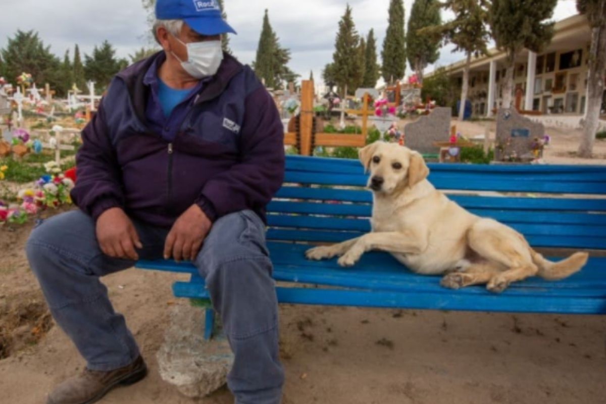 Cão acompanha túmulo de dono por três anos em cemitério na Argentina