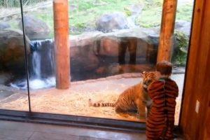 Menino é mordido por tigre no zoologico