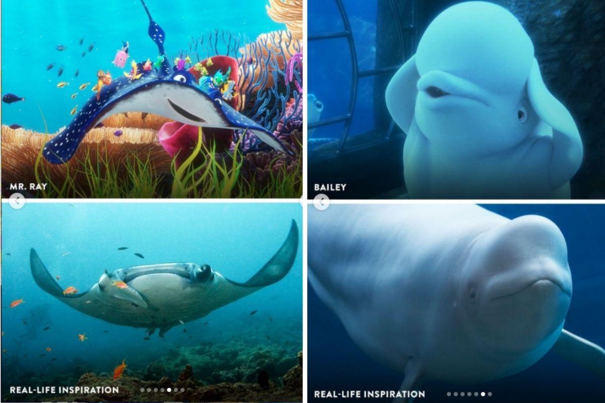 Disney mostra como são os personagens de 'Procurando o Nemo' na vida real