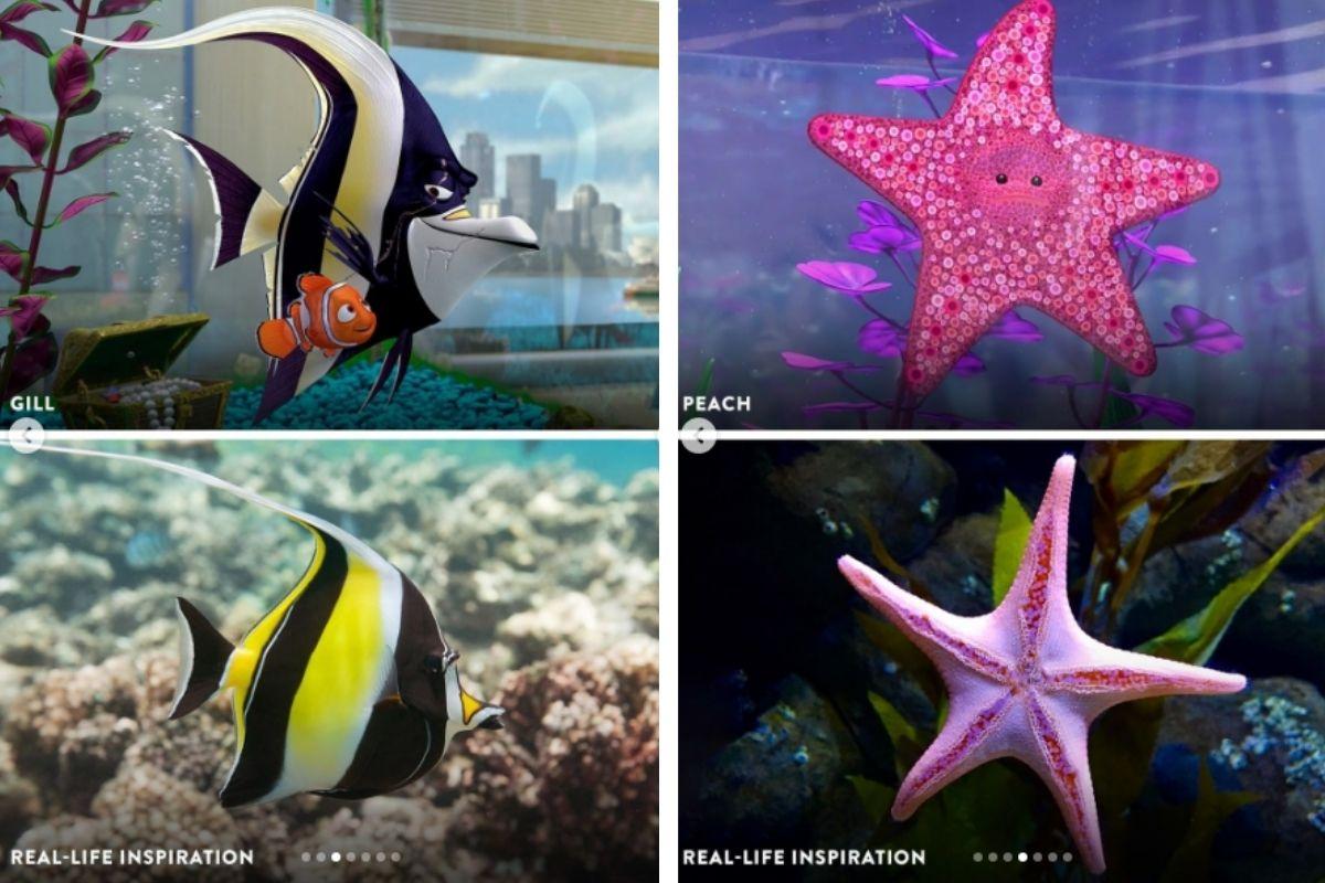 Os amigos do aquário também apareceram