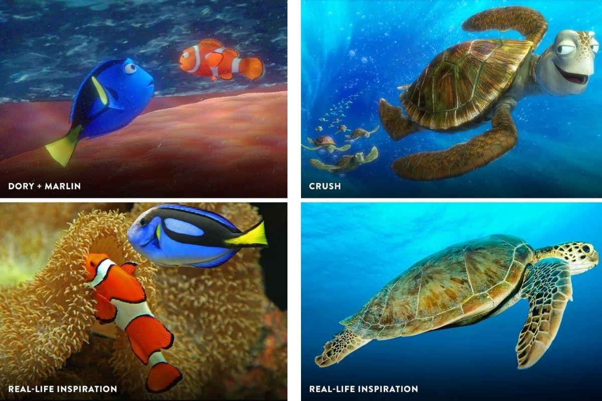 Dory, Nemo e Crush na vida real