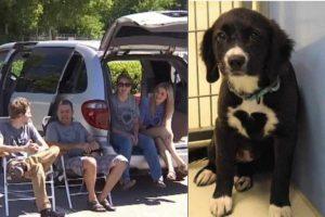 Família adota cachorra