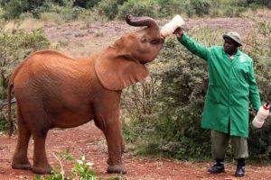 Houve um aumento de 13% da população de elefantes na África