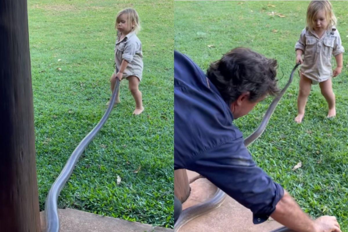 Bebê puxa cobra para fora do quintal pelo rabo na Austrália