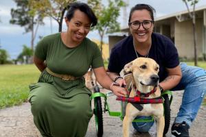 Casal viaja mais de 300 km até Sorocaba (SP) para adotar cão paraplégico resgatado (Foto: Arquivo pessoal)