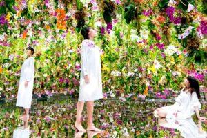Conheça o jardim de Tóquio onde as orquídeas se movem conforme você se aproxima