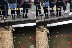 O gato surpreendeu a todos ao pegar o peixe no lago