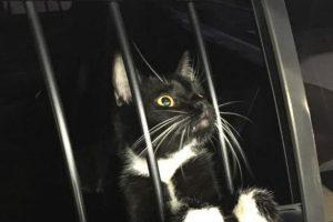 """O gato foi """"pego em flagrante"""" pelos policiais"""