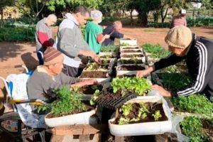 Horta comunitária faz idosos se sentirem mais ativos em ajudar