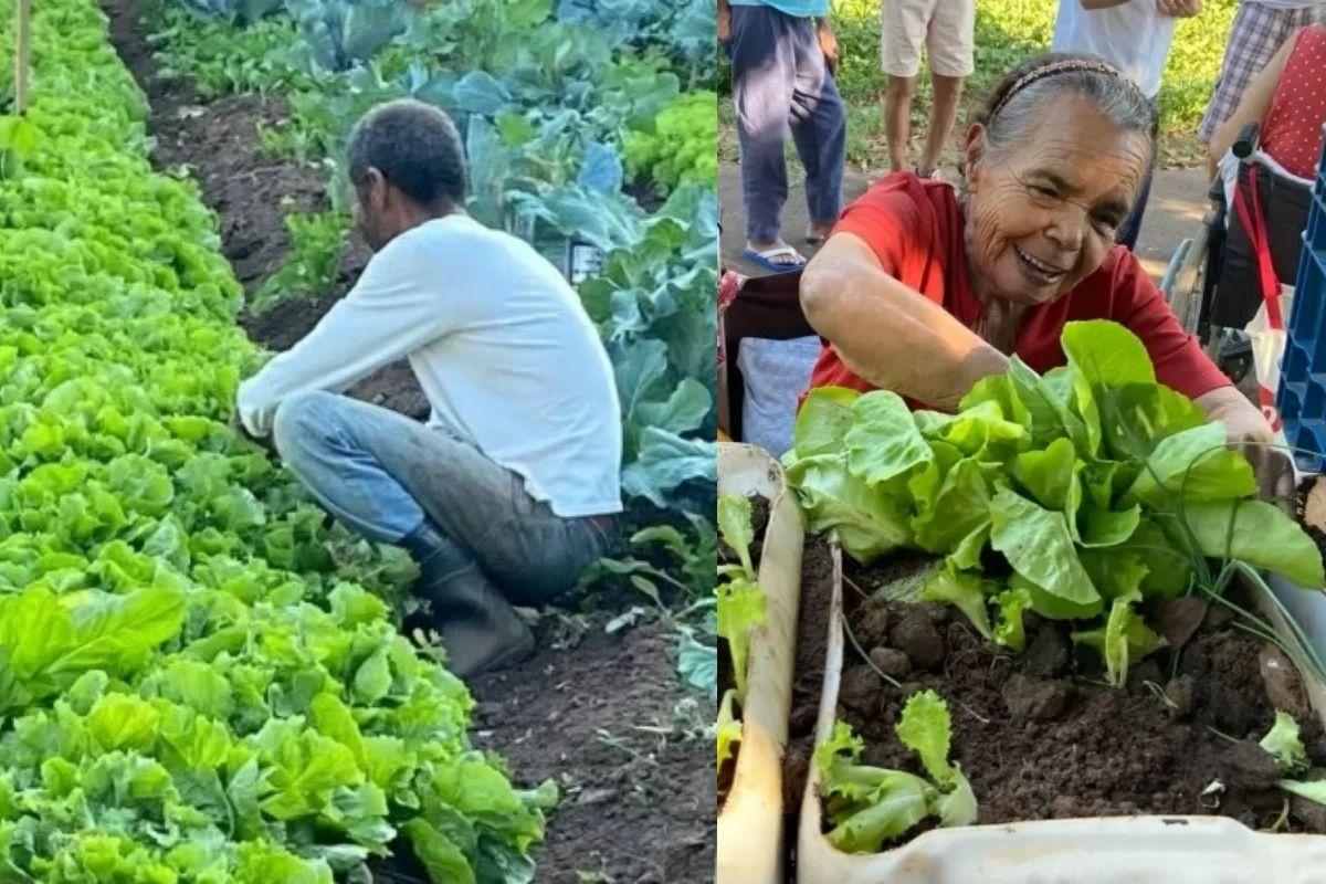 Os idosos se sentem felizes em poder contribuir com a horta