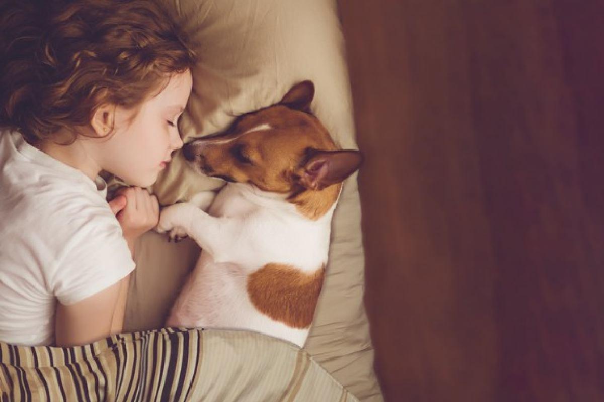 Os animais de estimação contribuem para o desenvolvimento da criança