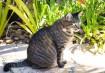 A gata Cléo estavana Granja Viana no dia das fotos, mas vai com a avó para onde ela for. Em Campinas,vive o gato Ônix