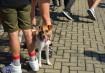 Os animais compareceram em peso ao evento, vários cachorrinhos passeando no local