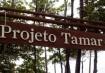 Visita ao Projeto Tamar - Praia do Forte